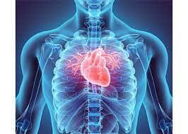 Lợi ích tích cực của CBD đối với tim mạch