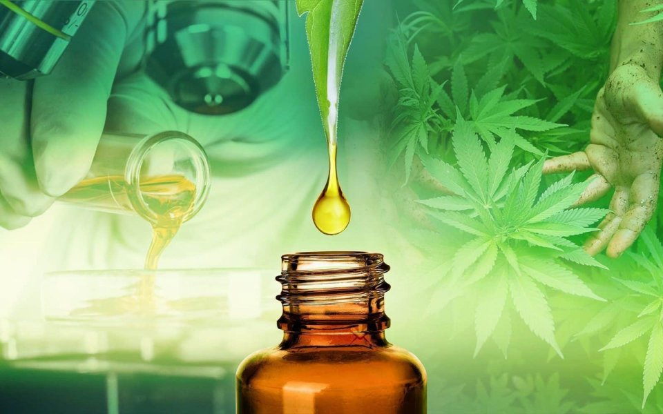 The 8 Most Important Cbd Studies L'eroe mai pubblicato