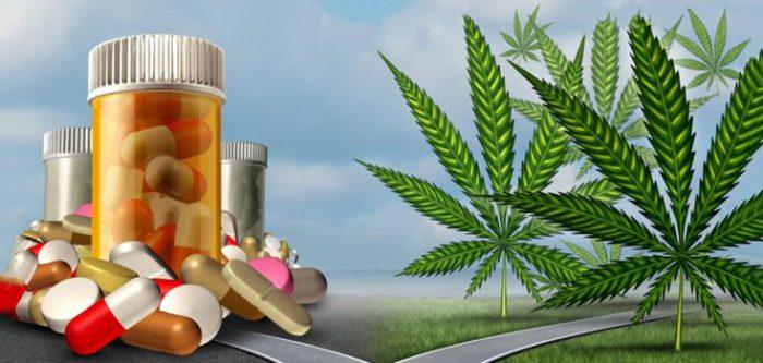 Hanf Kann 8 Gefährliche Drogen Ersetzen