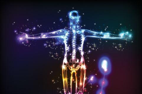 Sistemul Endokanabinoidni Lidského Tela