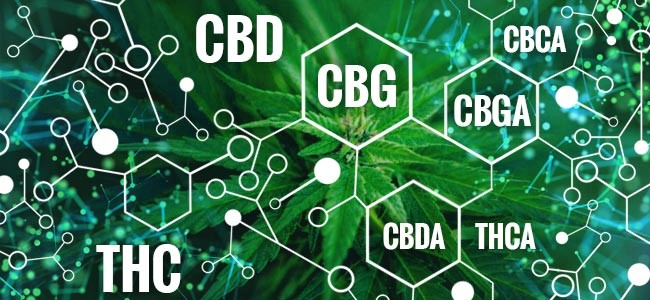 What is CBG (Cannabigerol)? Benefits + 2020 Guide
