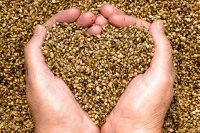 Hemp And Its 5 Surprising Health Benefits