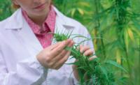 Cannabis Moet medische scholen beginnen met lesgeven