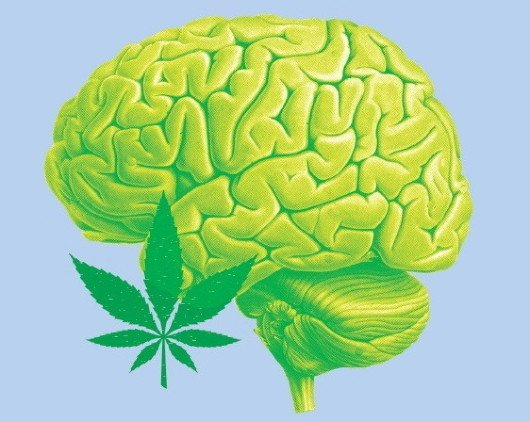 Cbd How It Works In The Human Brain