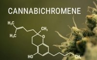 New Cannabinoid Cbd How Can It Help