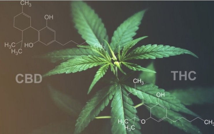 How Do Some Cannabinoids Work In Our Body