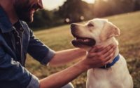 How Can Cbd Affect Your Dog