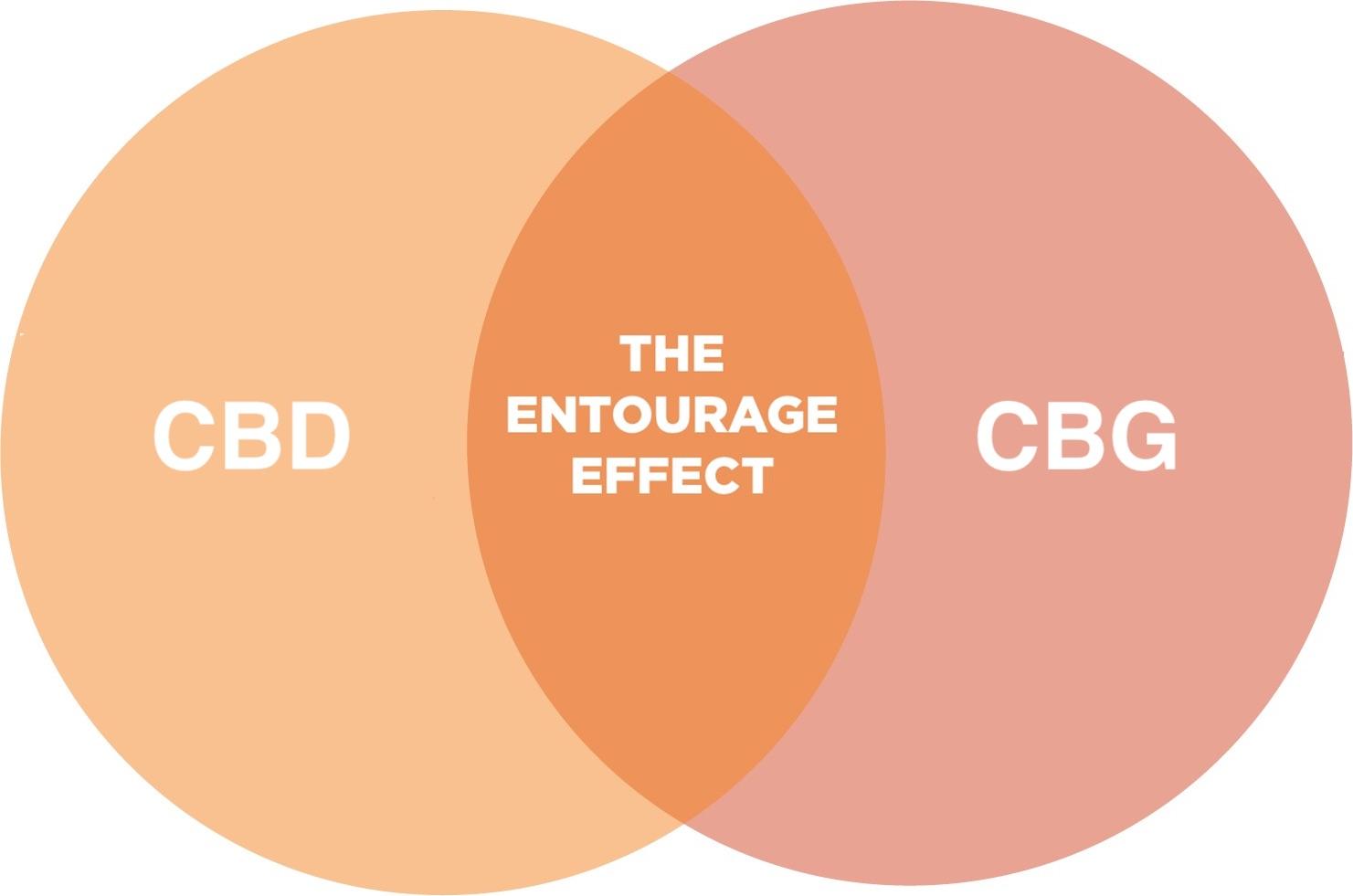 Cbd Cbg Entourage Etkisi