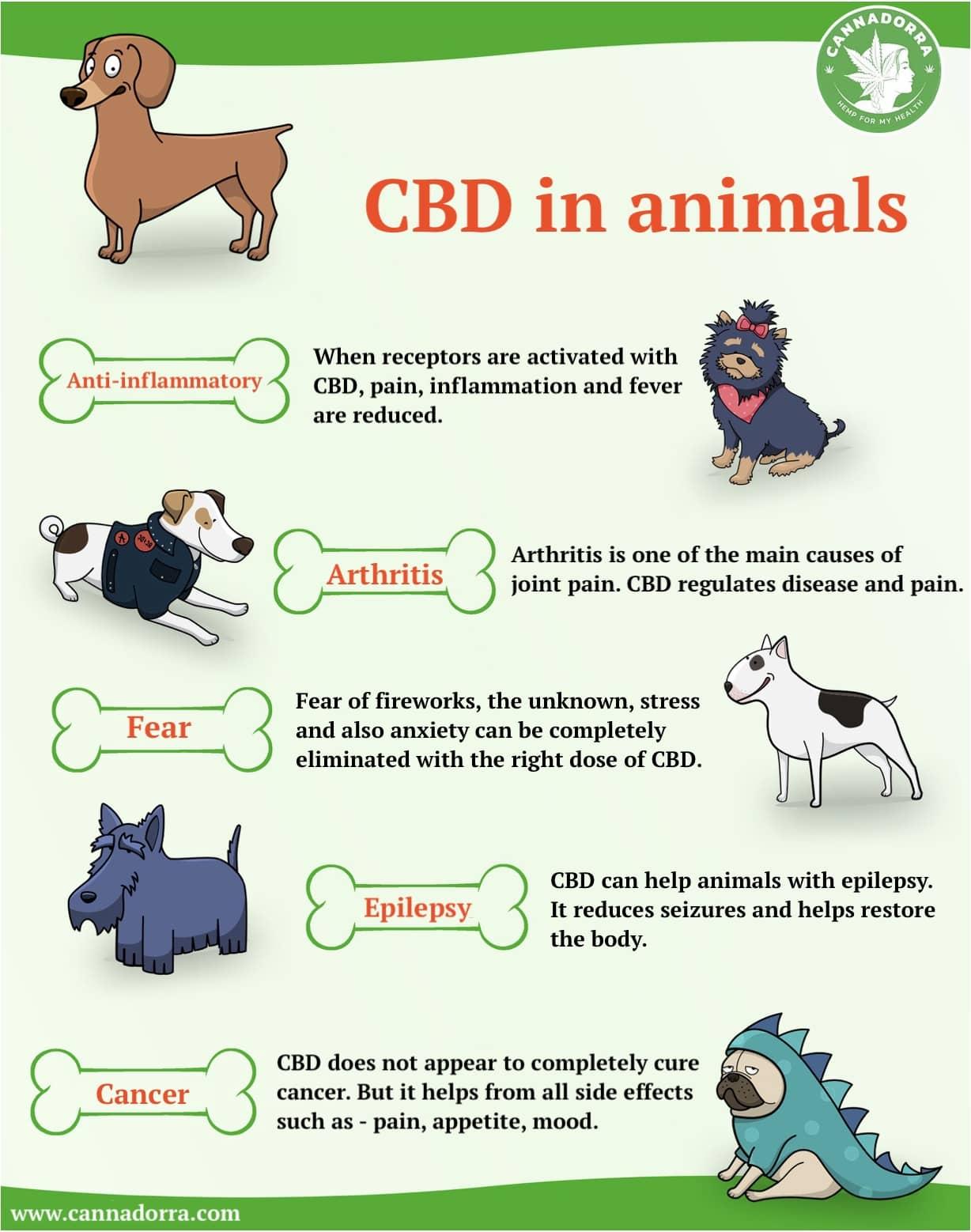 Cbd In Animals Infograph 2
