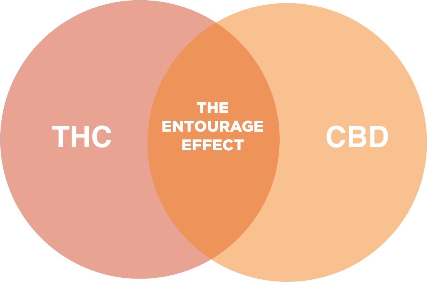 Thc Cbd Entourage Etkisi